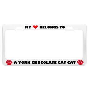 A York Chocolate Cat Cat Pet White Metal License Plate