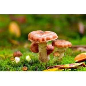 Mushroom under a Tree   Peel and Stick Wall Decal by