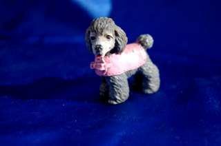 Toy Poodle dog so cute w Pink Sweater coat
