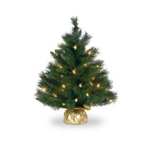 24 Majestic Fir Christmas Tree; 35 Clear Lights and Gold
