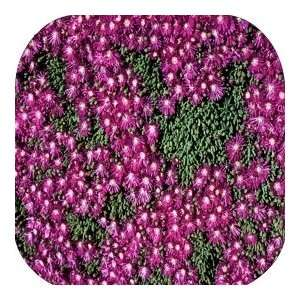 Coasters Country Flower/Flowers/Floral   (CSFL 386)